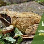 10 sposobów jak pozbyć się żab - skutecznie i bez zabijania