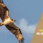 Jak odstraszyć jastrzębia od kur, gołębi i innych zwierząt. 7 sposobów na legalne pozbycie się jastrzębi