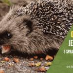 Jak odstraszyć jeża. 5 sposobów jak pozbyć się jeży z ogrodu
