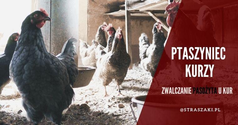 Ptaszyniec kurzy - zwalczanie i domowy sposoby na pozbycie się pasożyta
